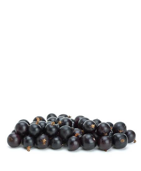 Μούρο (καλλιεργημένο)